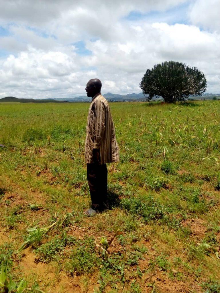 Destroyed crops in Nigeria